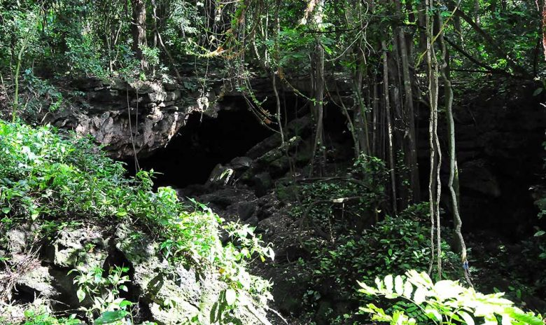Maragambo Forest bat cave