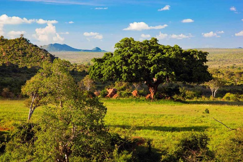 18262125 - grassland with rich flora, savanna and bush landscape in africa. tsavo west, kenya.